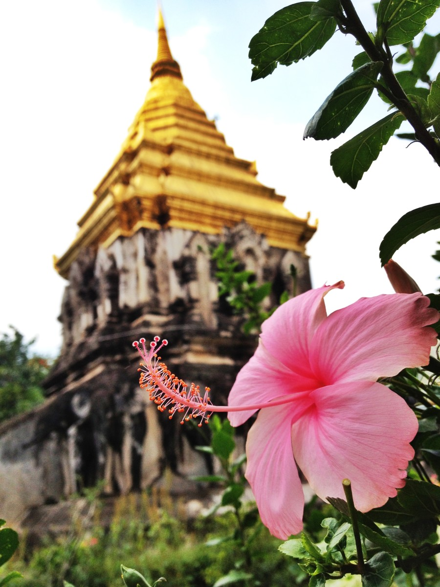 A beautiful escape from the noisy city at a peaceful temple in Chiang Mai.