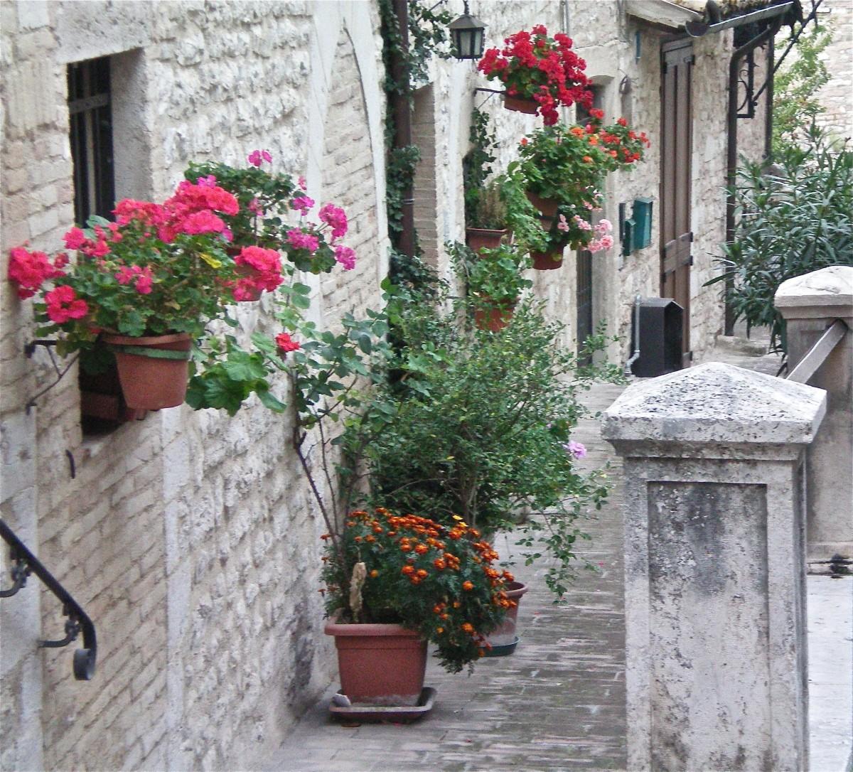 A geranium filled street © A Harrison