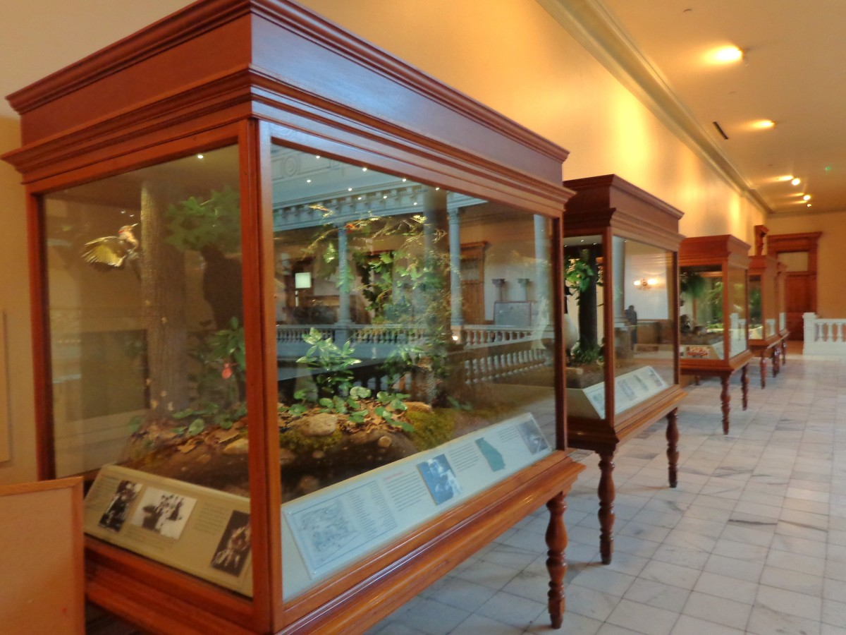"""Ecozone"" Display cases.  Photo by author."