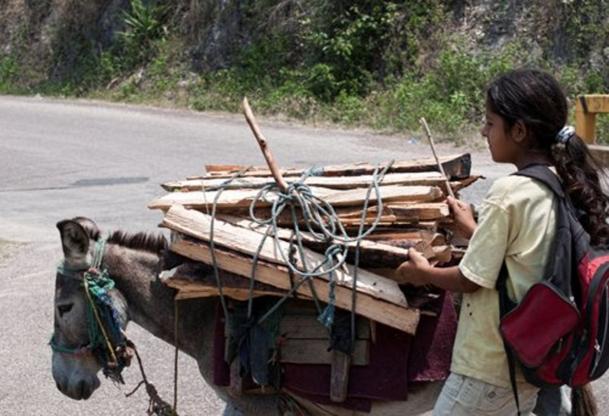 A young girl hauling wood with her burro