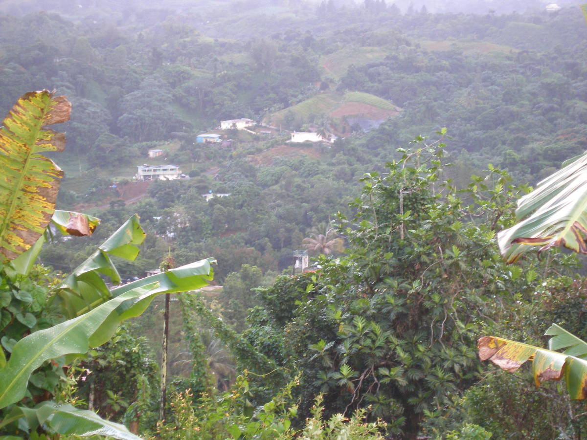 Mountain homes in the distance in San Lorenzo