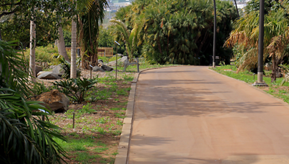 Well maintained walkways give a neat, recreational parkland feel to the Palmetum