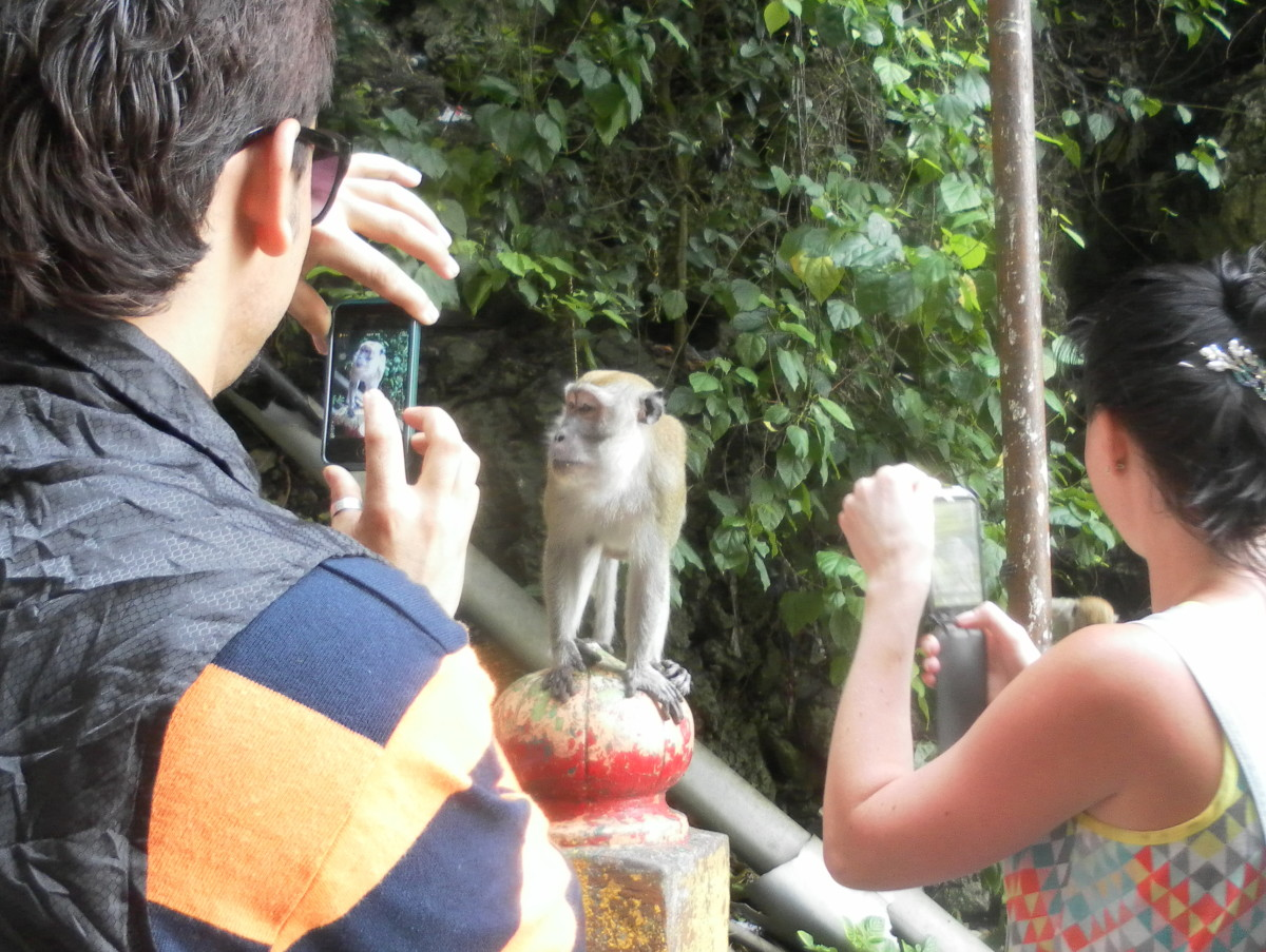 A wild monkey posing for visitors.