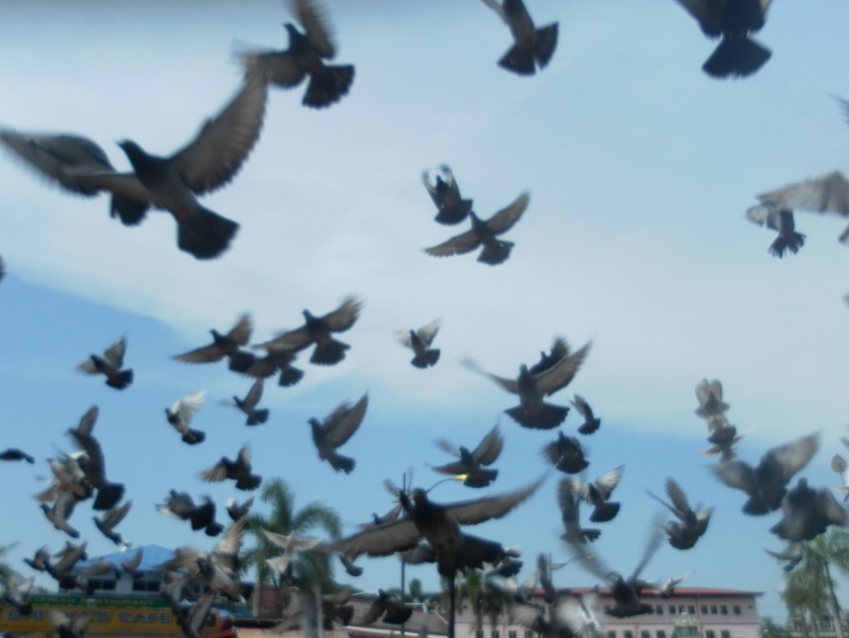 Pigeons flying around the Batu Caves courtyard area.