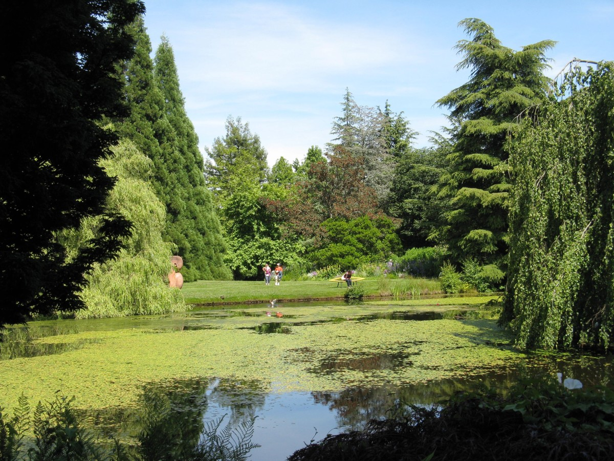 Looking across a lake to another section of the garden