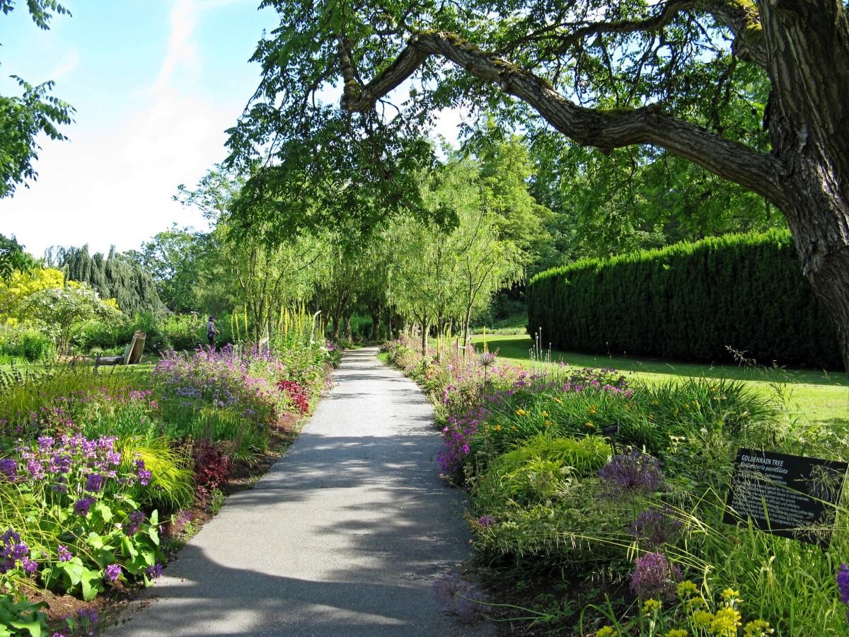 A pathway through flower beds