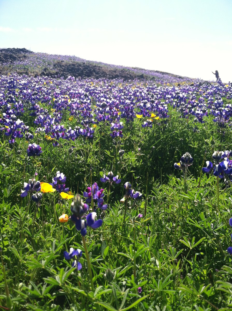Rich coloration of hills and meadows makes Table Mountain a worthwhile destination.