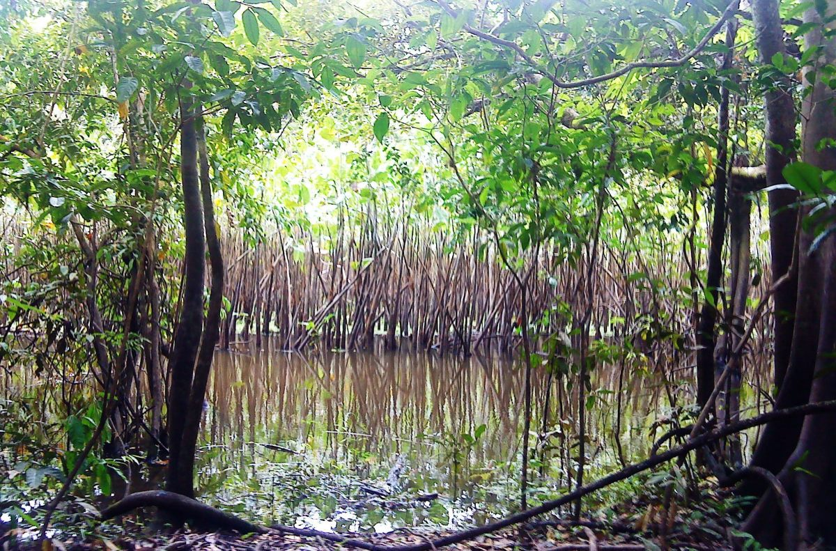 Swamps on the way to Marasha.