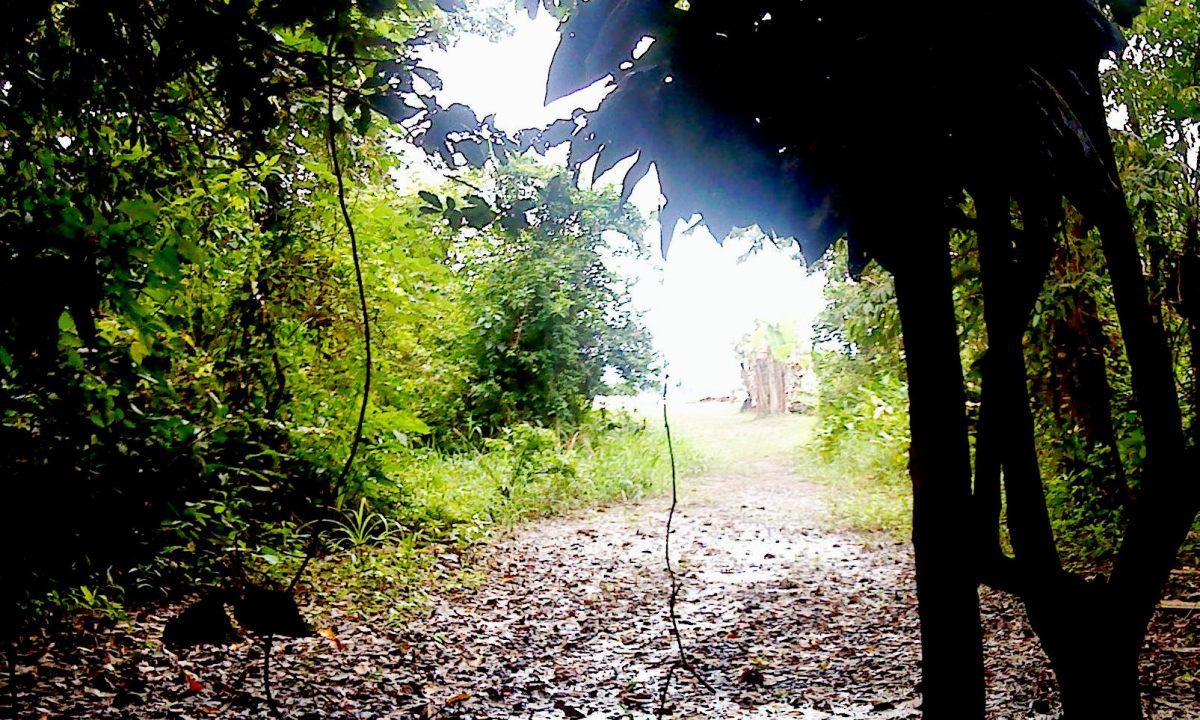 Rainforest shadows near Marasha.