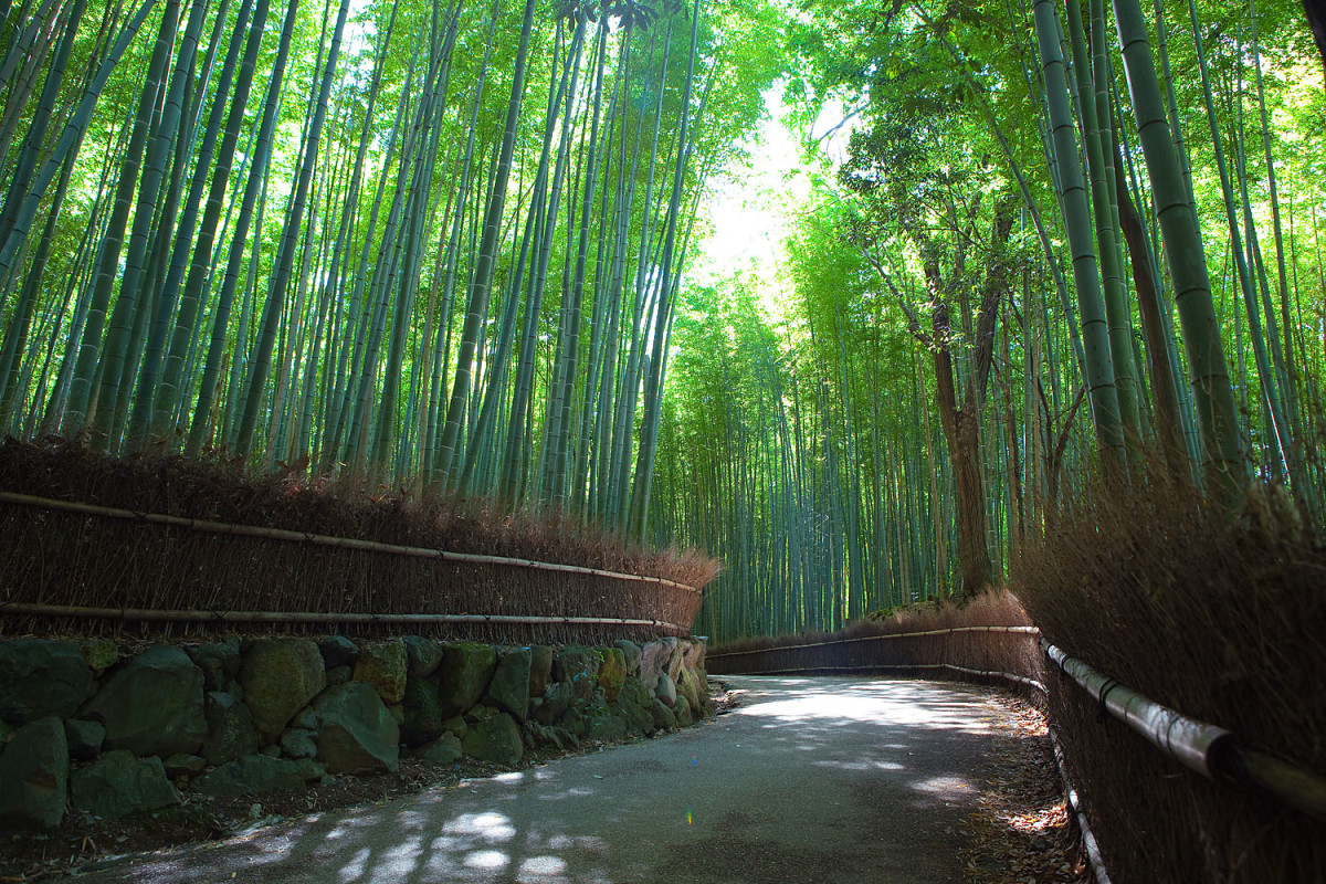 """Arashiyama's """"Sagano Bamboo Forest"""" is located near Togetsu Bridge and is an iconic symbol of Japan. It is worth preparing yourself for the fact that the bamboo forest is not very long, a point which underwhelms some people."""