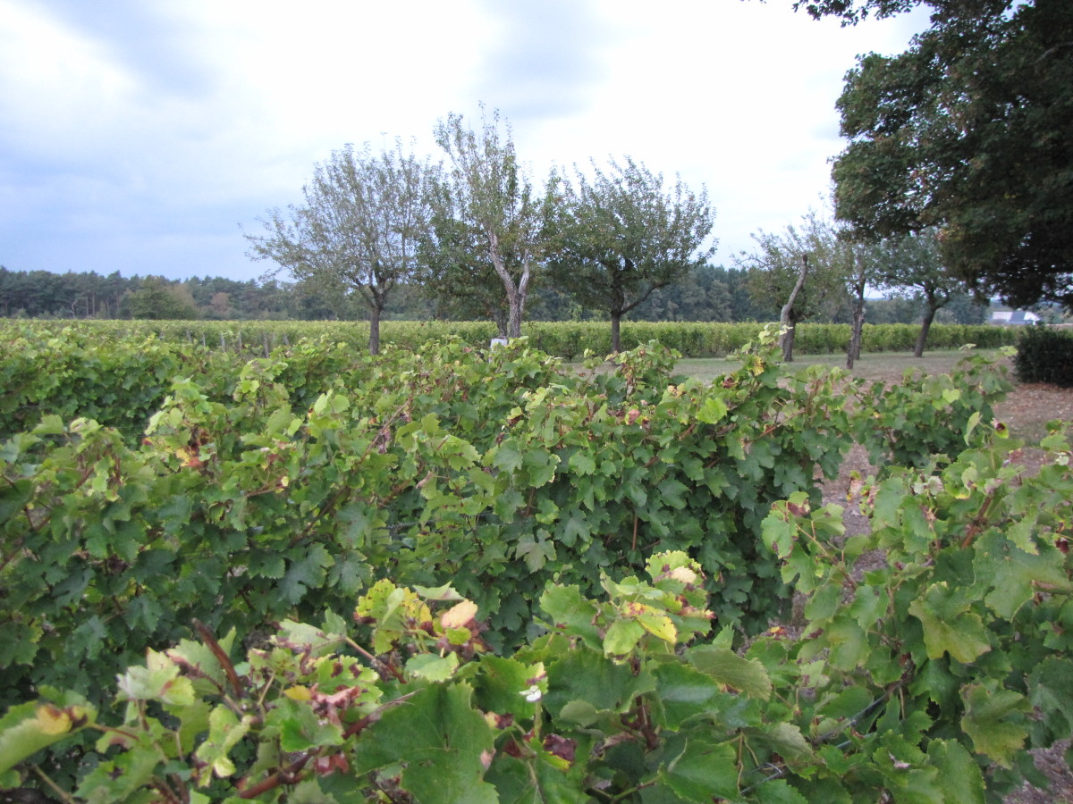 Chateau de Pintray Vineyard