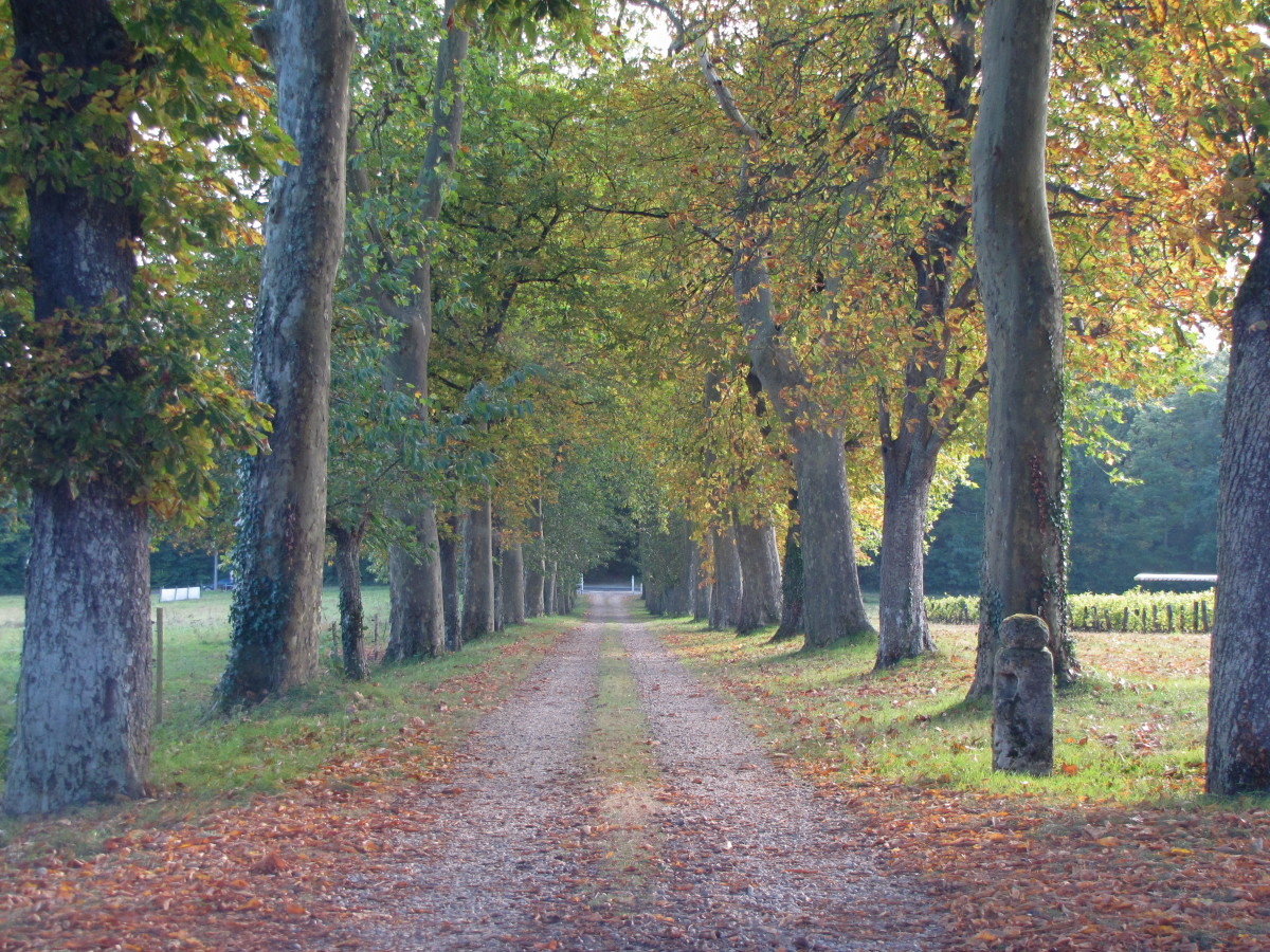 The tree lined driveway leading to Chateau de Pintray