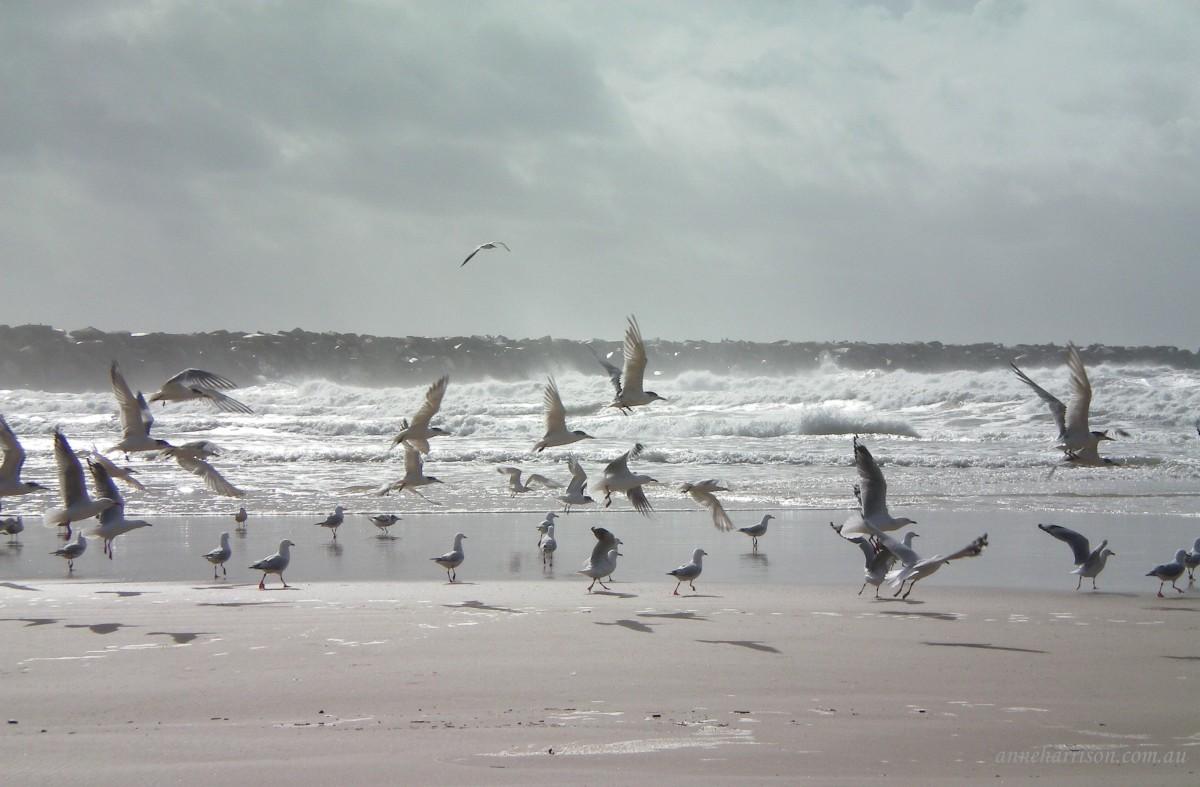 Turner's beach, Yamba