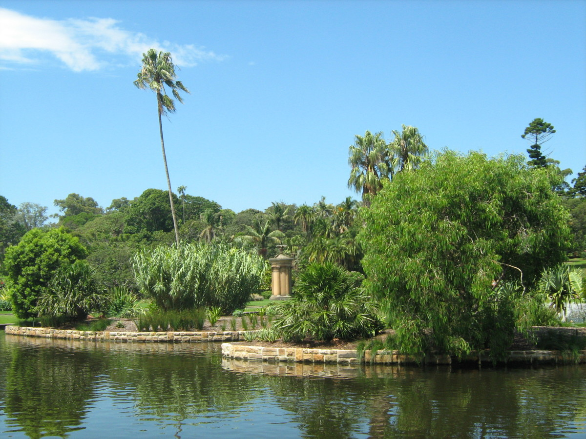 Lake at the Royal Botanic Gardens