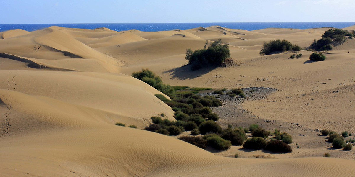 Here and there in sheltered locations in the dunes, vegetation grows