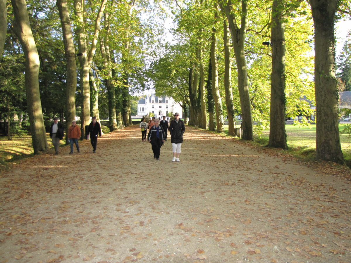 The tree lined path that takes visitors to and from Chateau Chenonceau.