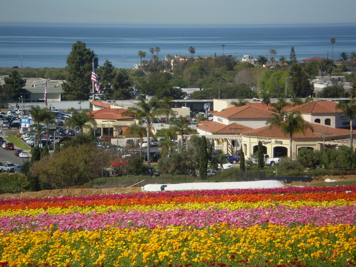 Looking down at the Carlsbad Flower Fields.