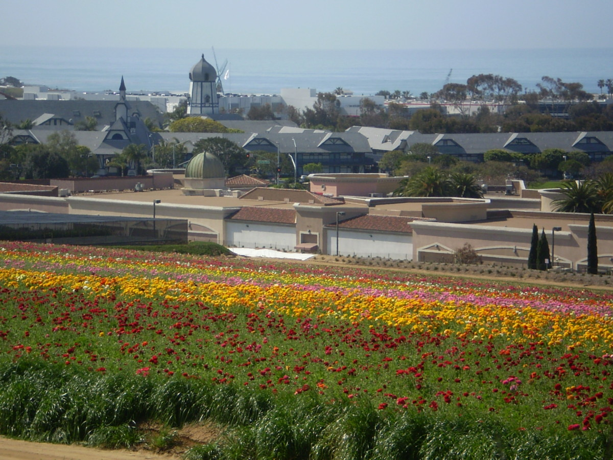 View of Carlsbad, California from Armada Drive showing the Flower Fields.