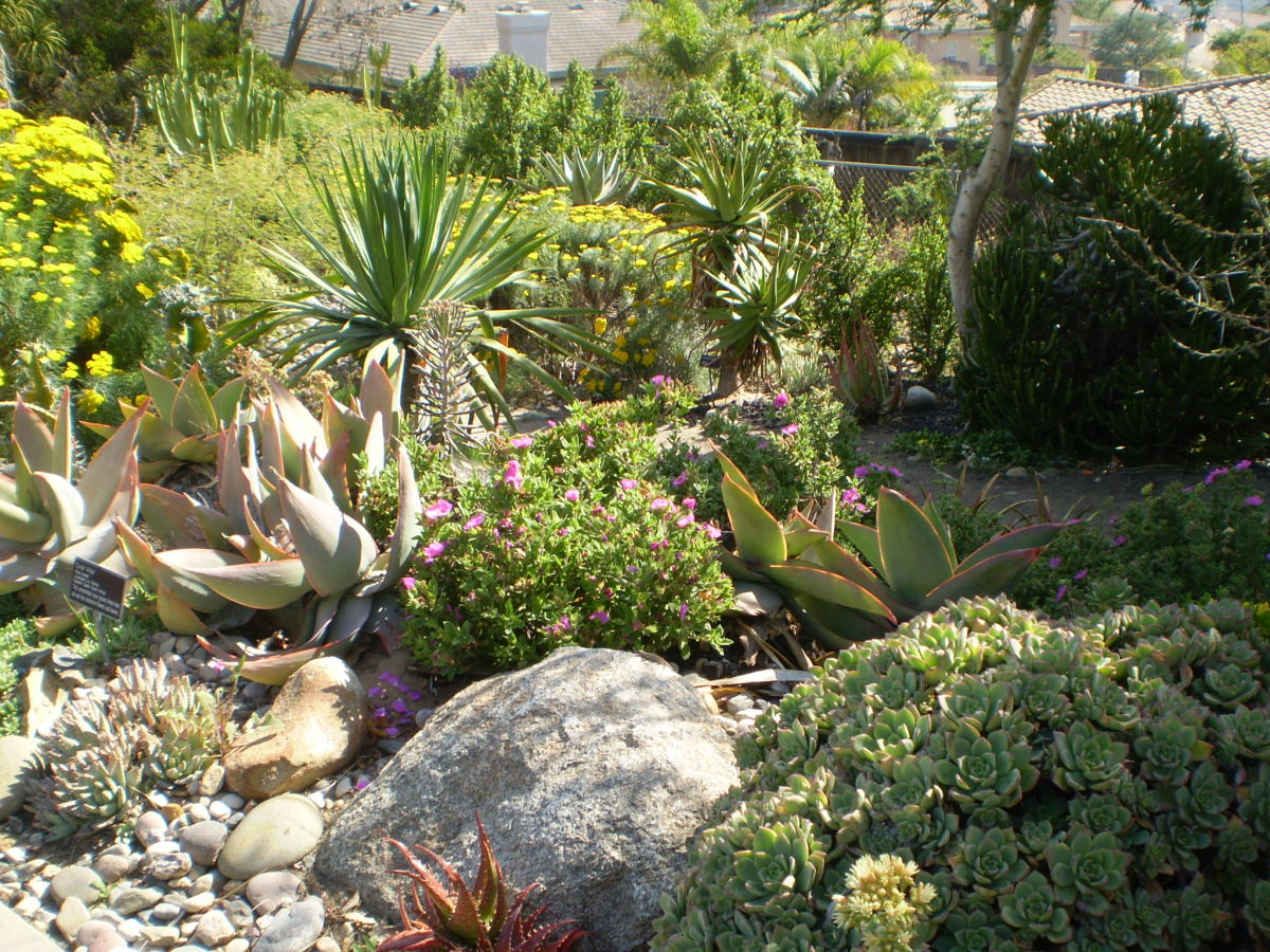 Native southern California plants at the San Diego Botanic Gardens.