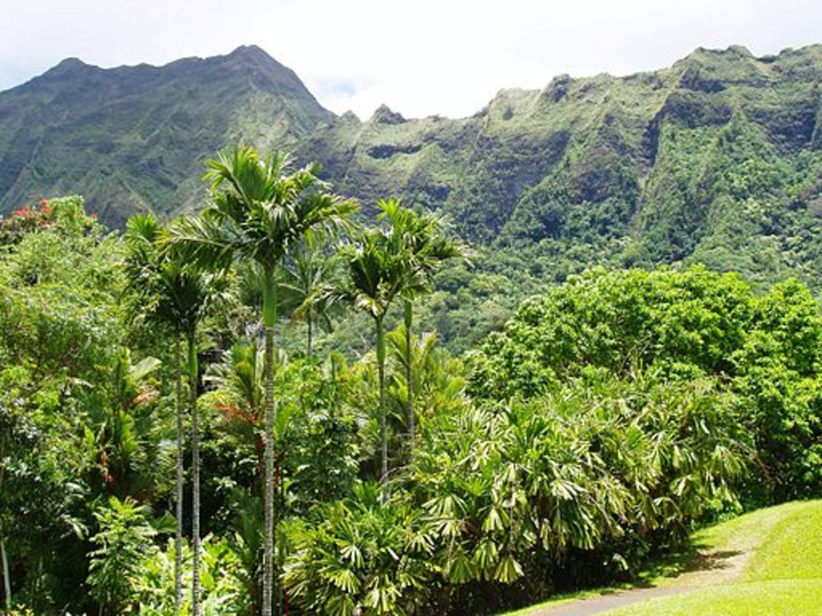 The Ko'olau Mountains provide a perfect backdrop for the gardens.