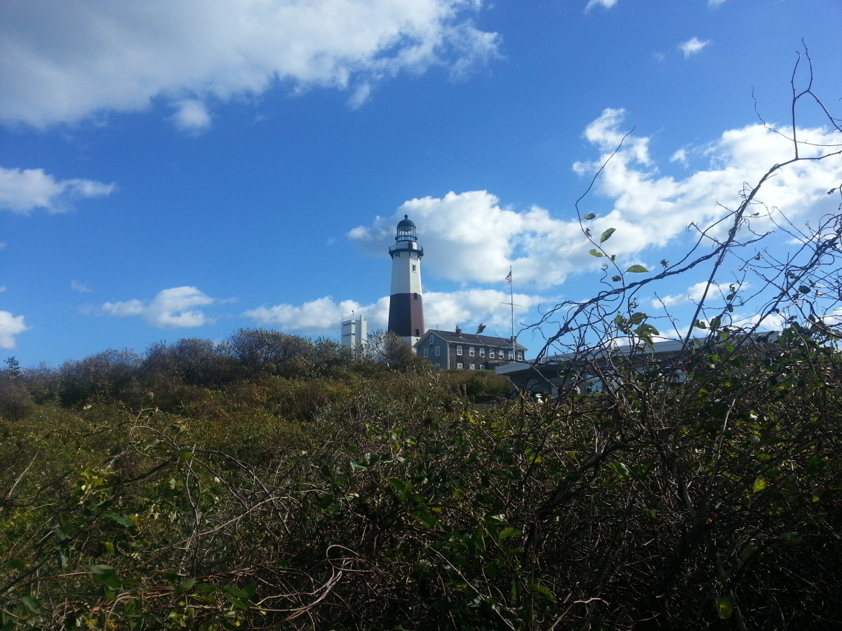The harsh environment around the Montauk Point Light is unsuited for vegetation other than scrubby trees and vines.