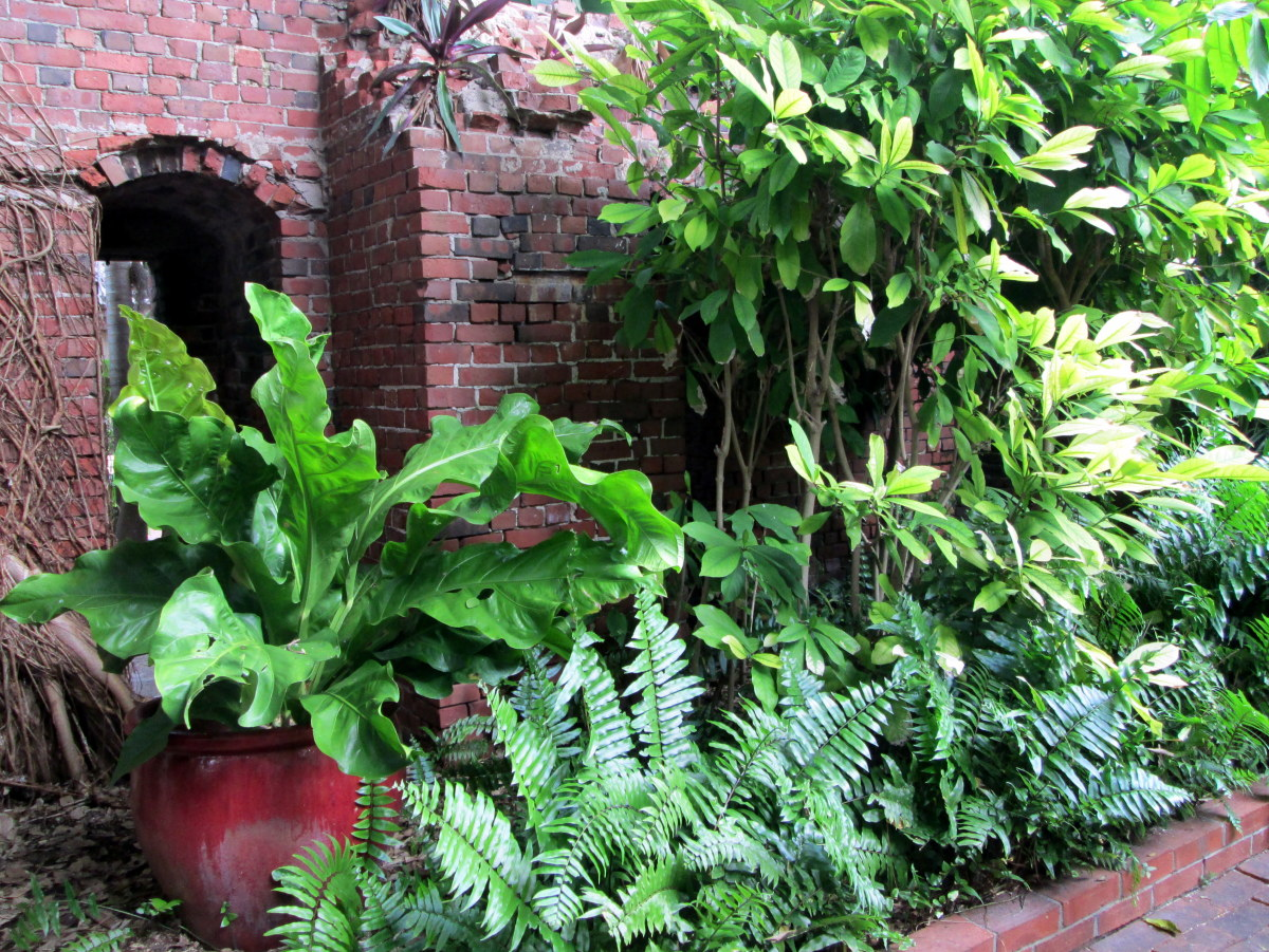 A garden oasis awaits inside the crumbling walls of West Martello Tower