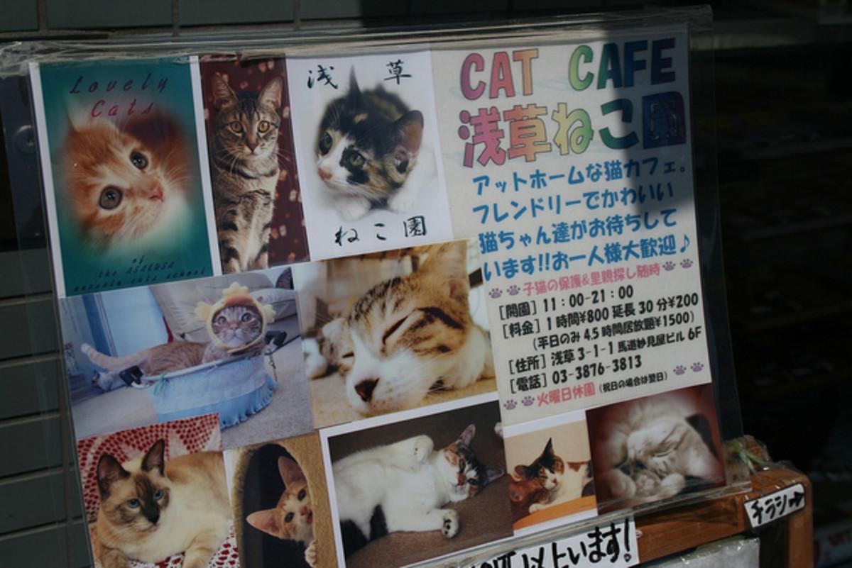 Cat Cafe in Tokyo, Japan