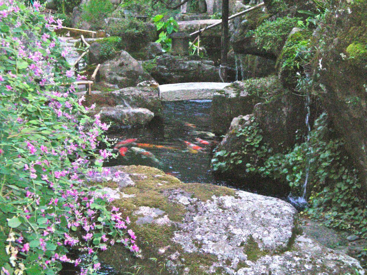 A forgotten pond (c) A. Harrison