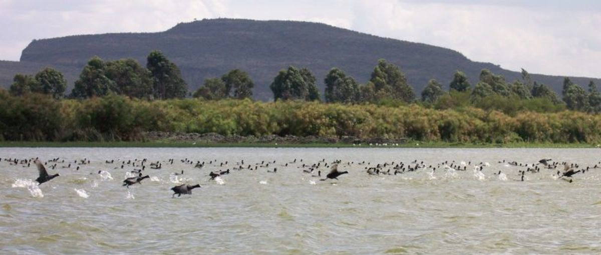 A Section of Lake Naivasha