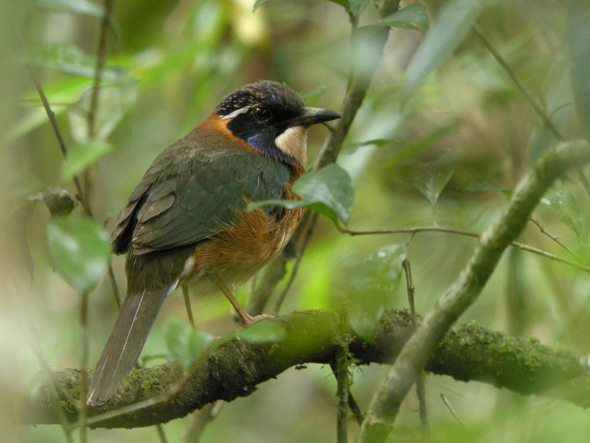 One of the Popular Birds in Kenya
