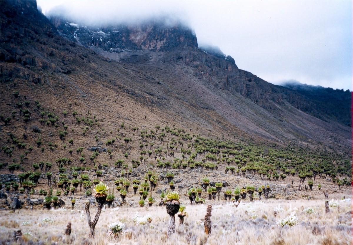 One of the Mount Kenya's Peaks