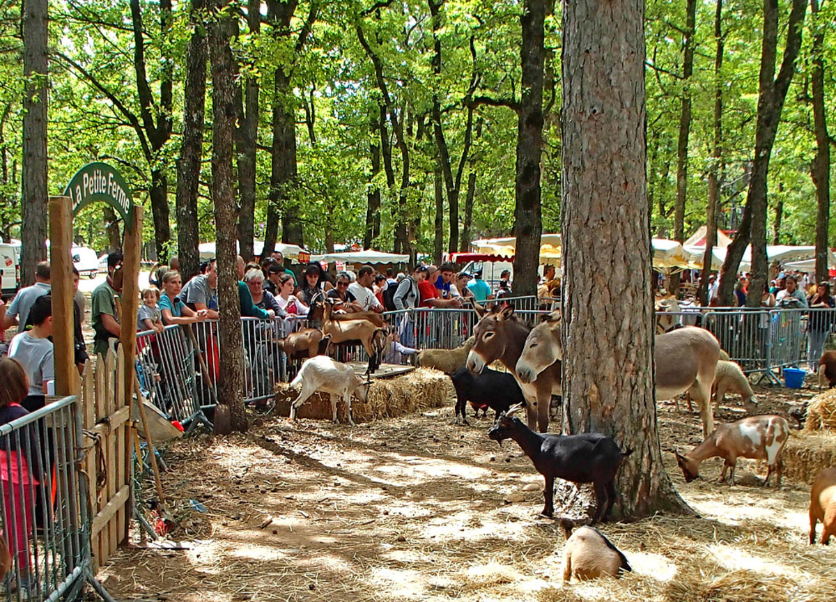Farm-animal petting zoo at festival.