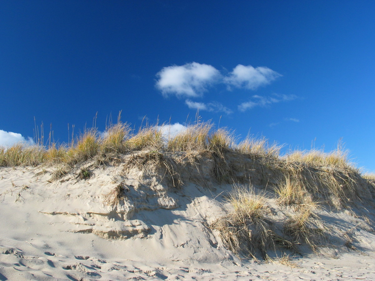 Dune on Cape Cod ,  Provincetown