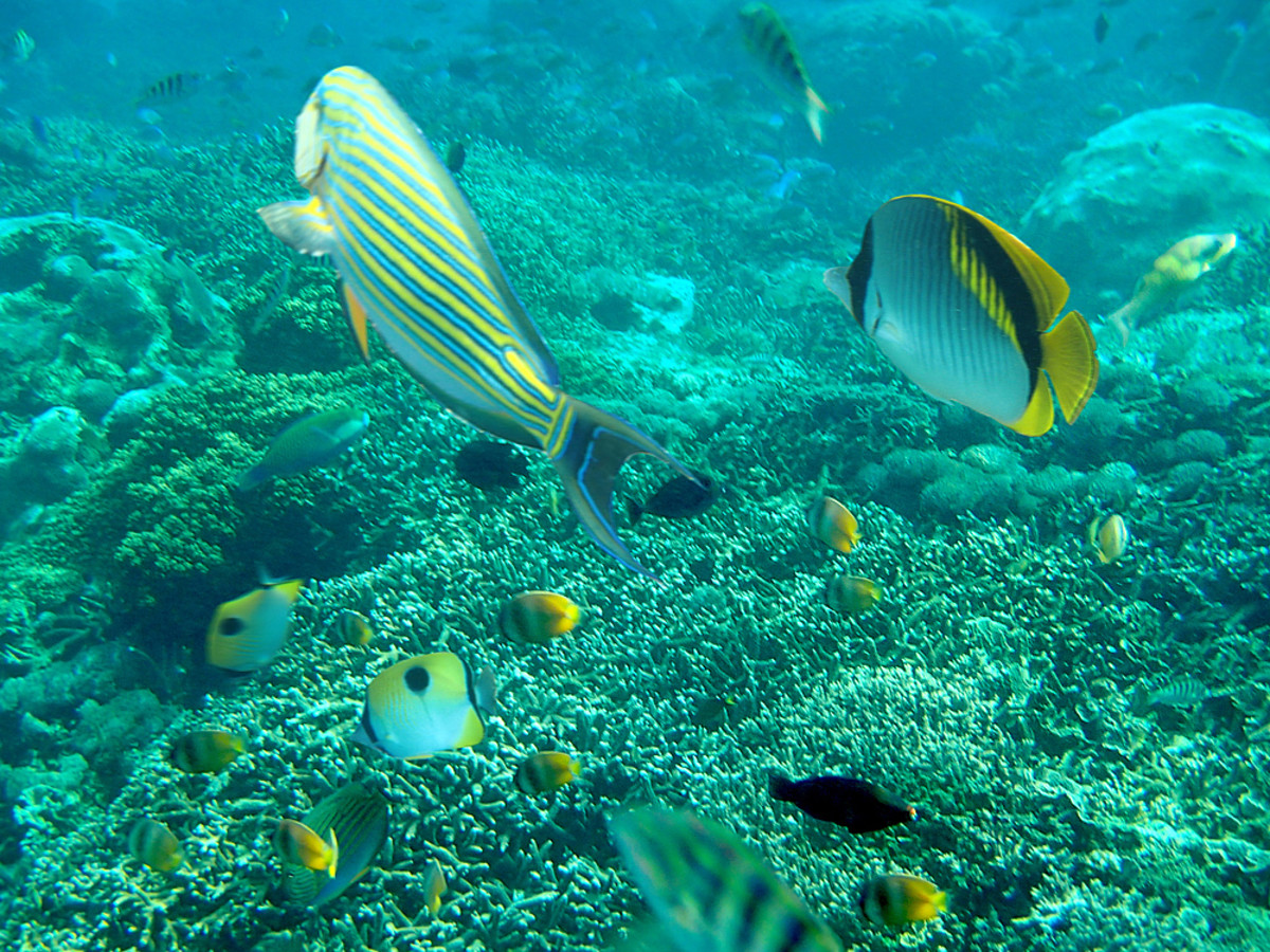 Underwater at Mangrove Point offshore snorkeling site.