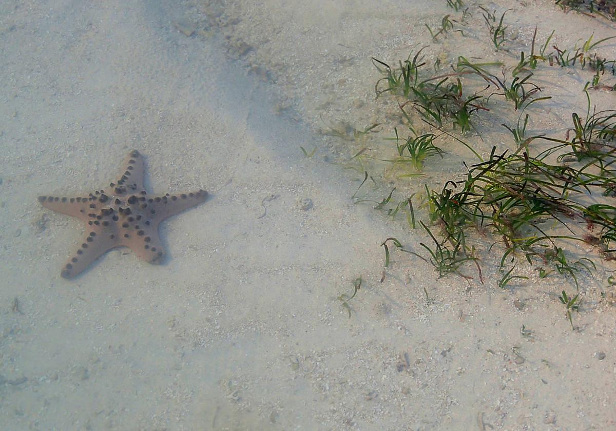 Starfish in a tidal pool.