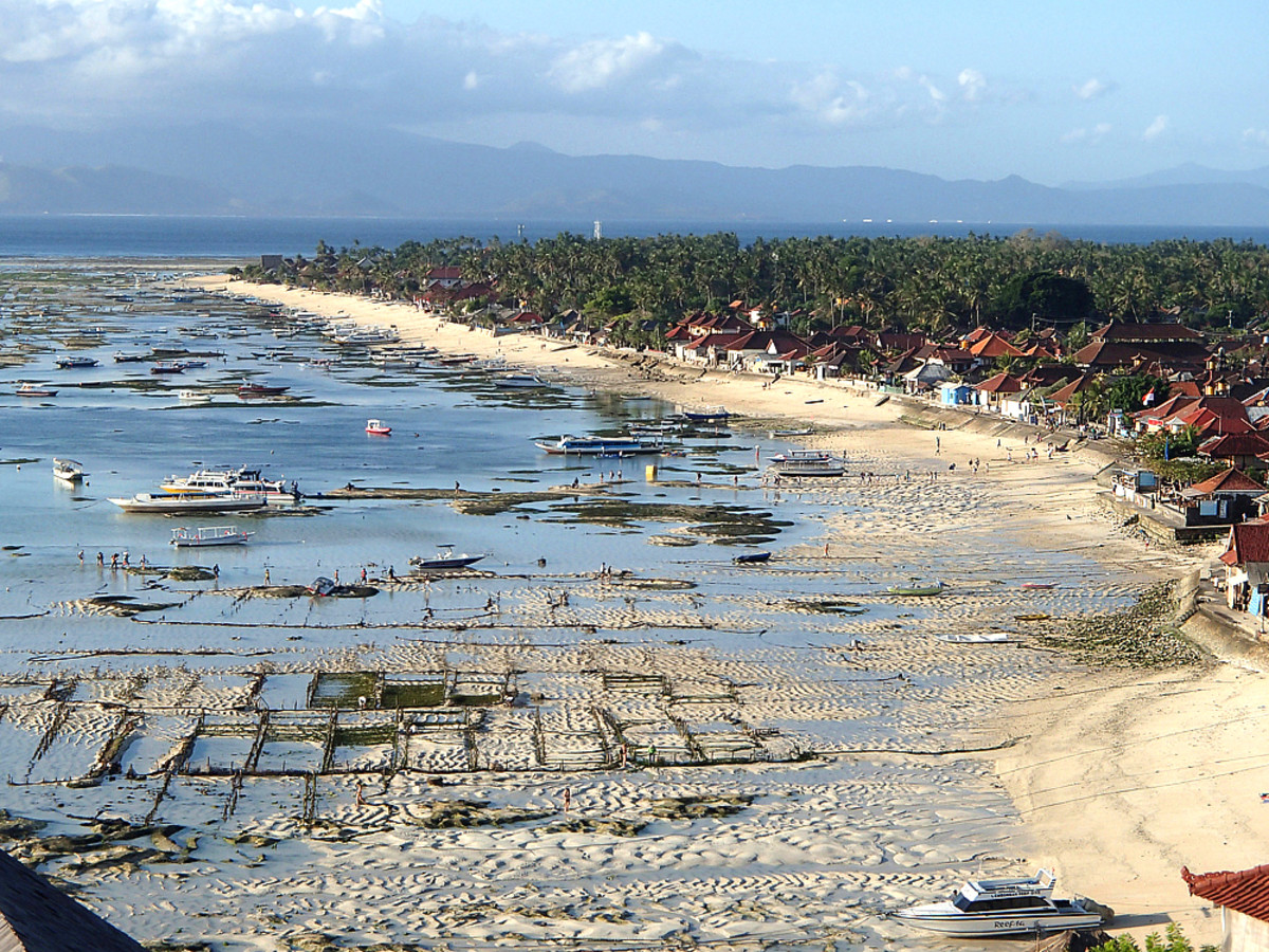 Low tide in the afternoon, with exposed seaweed beds on sandy ocean floor.