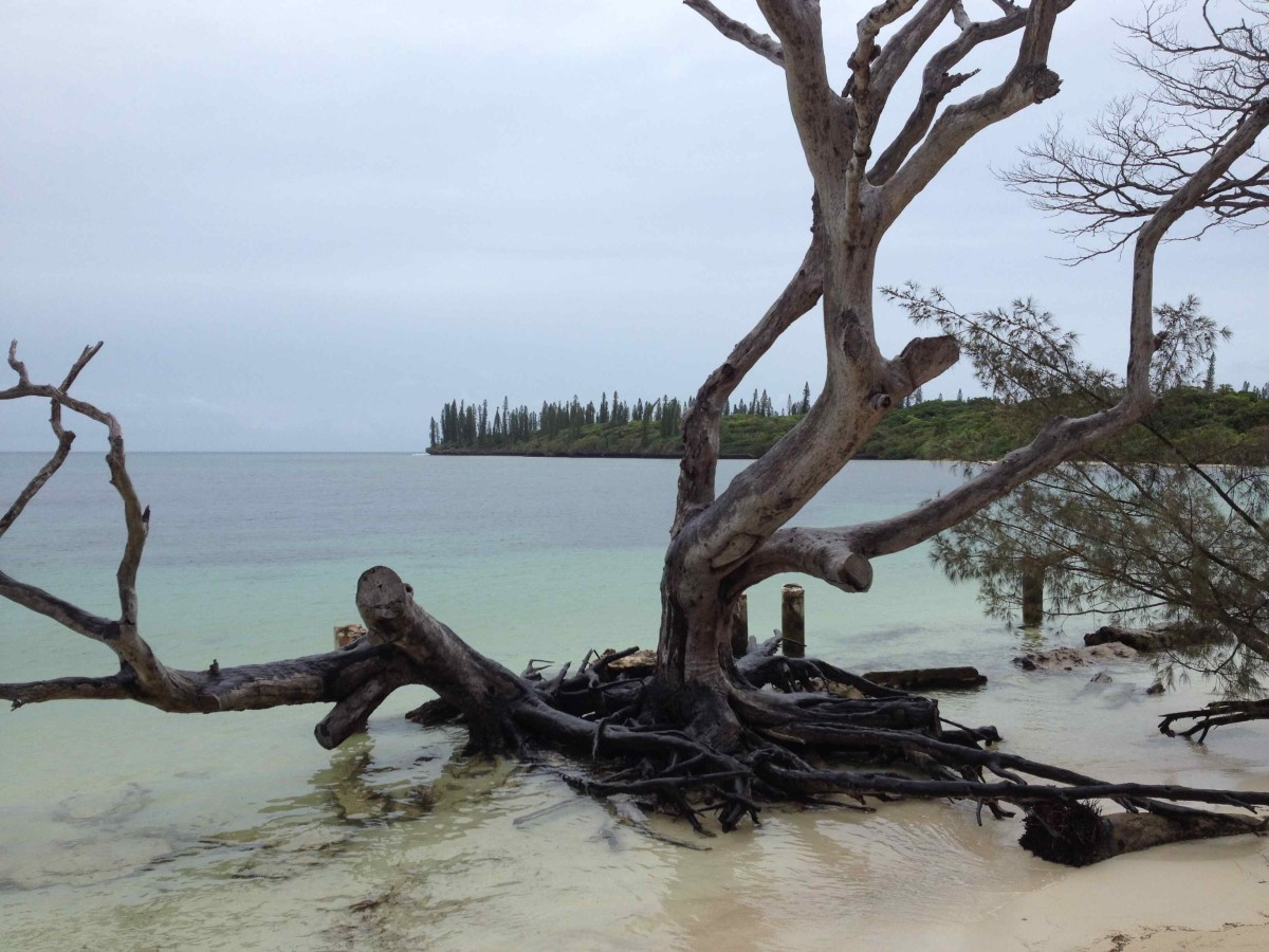A distant view of the pine trees for which the island is named (c) A. Harrison