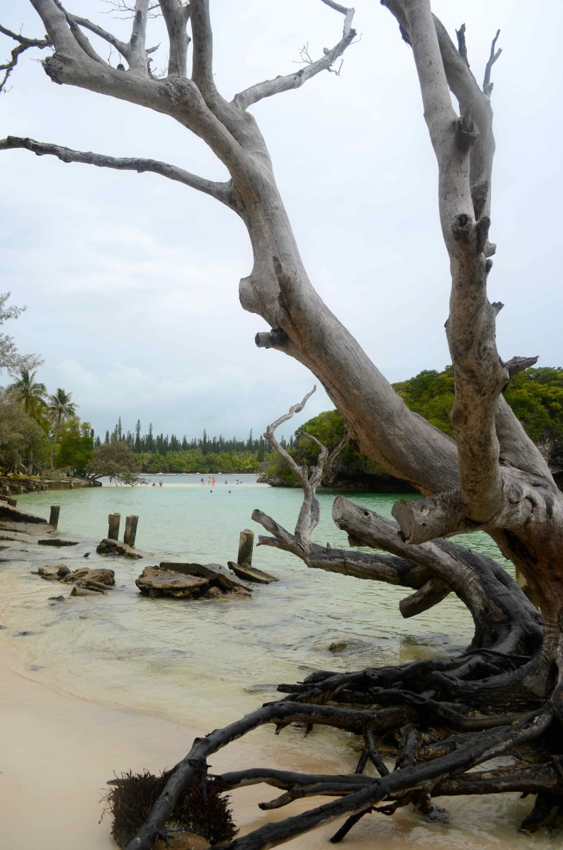 A prehistoric landscape (c) A. Harrison