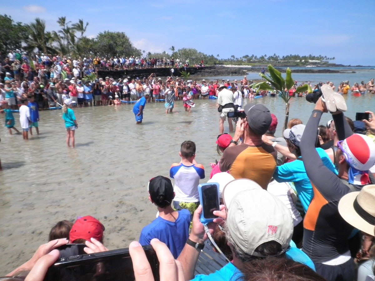 Release of turtles into the ocean on July 4