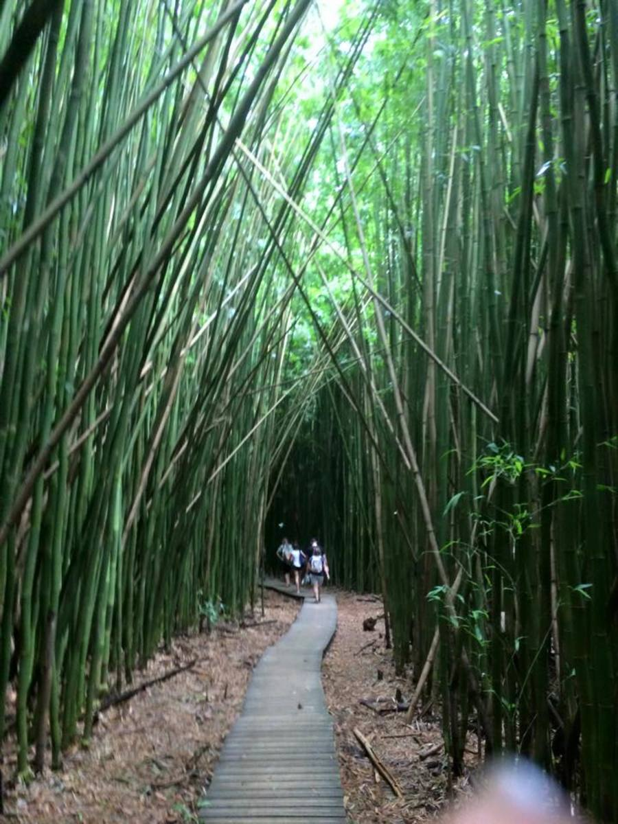 Bamboo Forest! If I had to live in a forest, I'd live here.