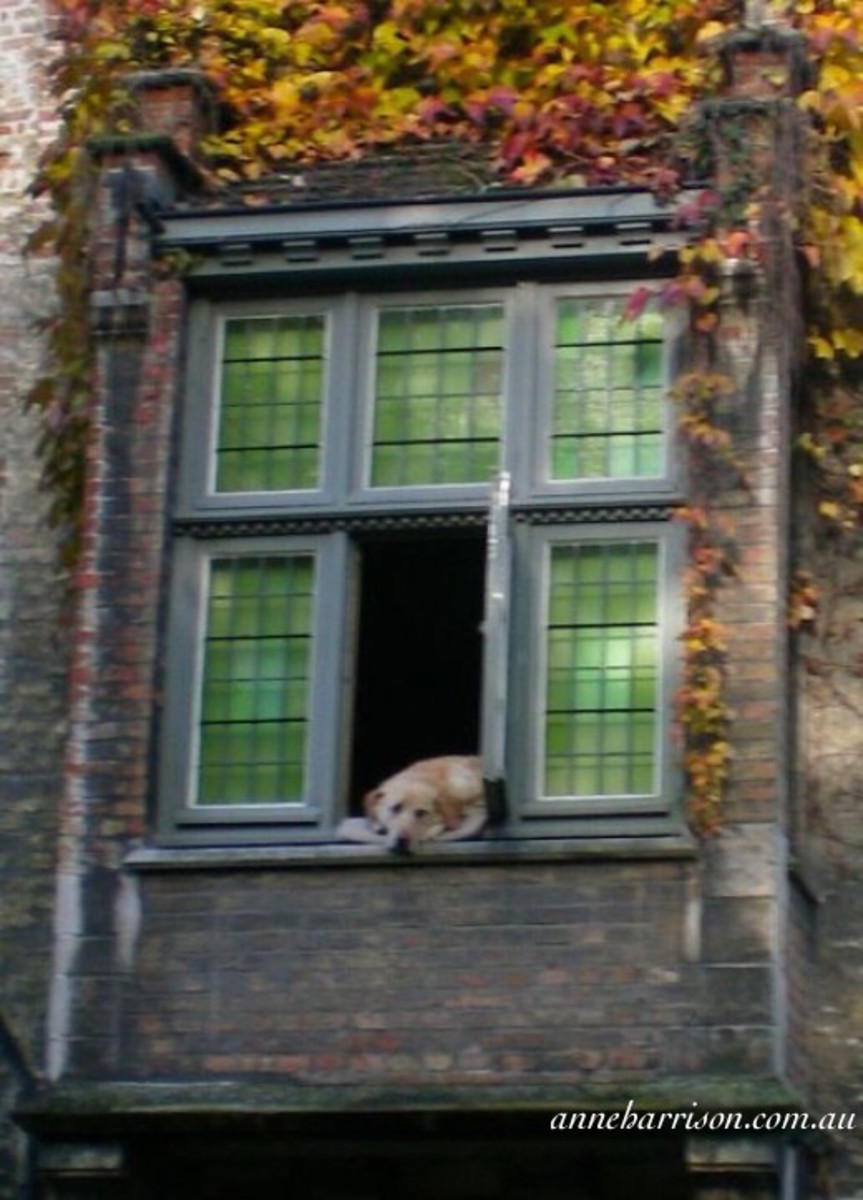 The Dog of Bruges