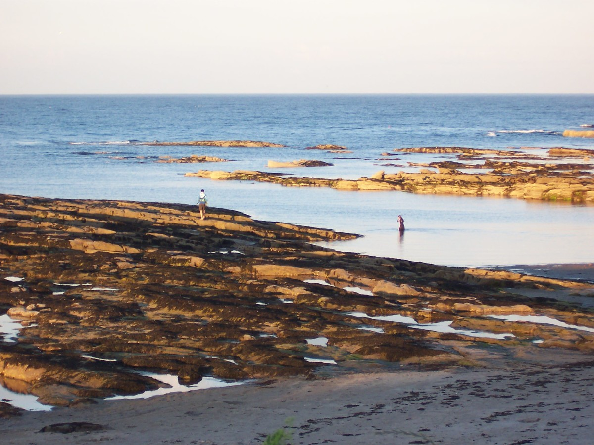 The rock pools of North Beadnell