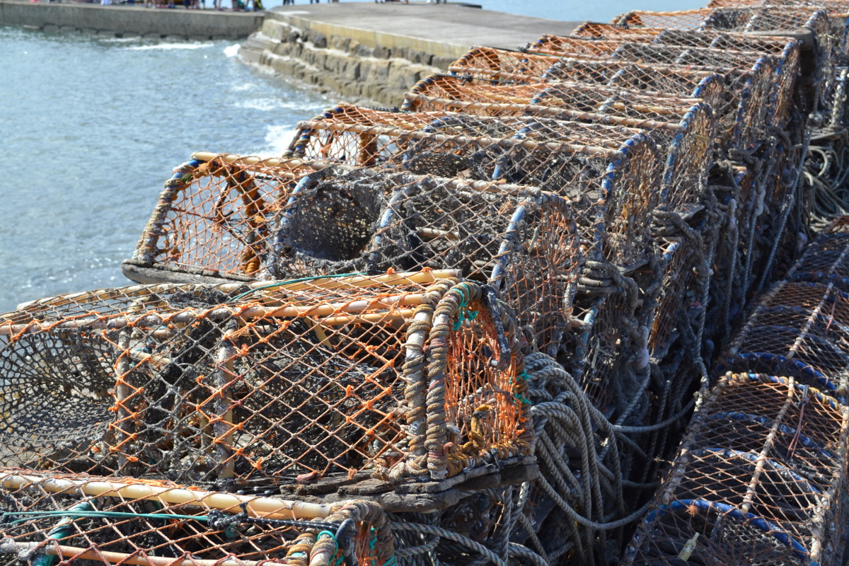 Crab Pots lined up at Beadnell Harbour