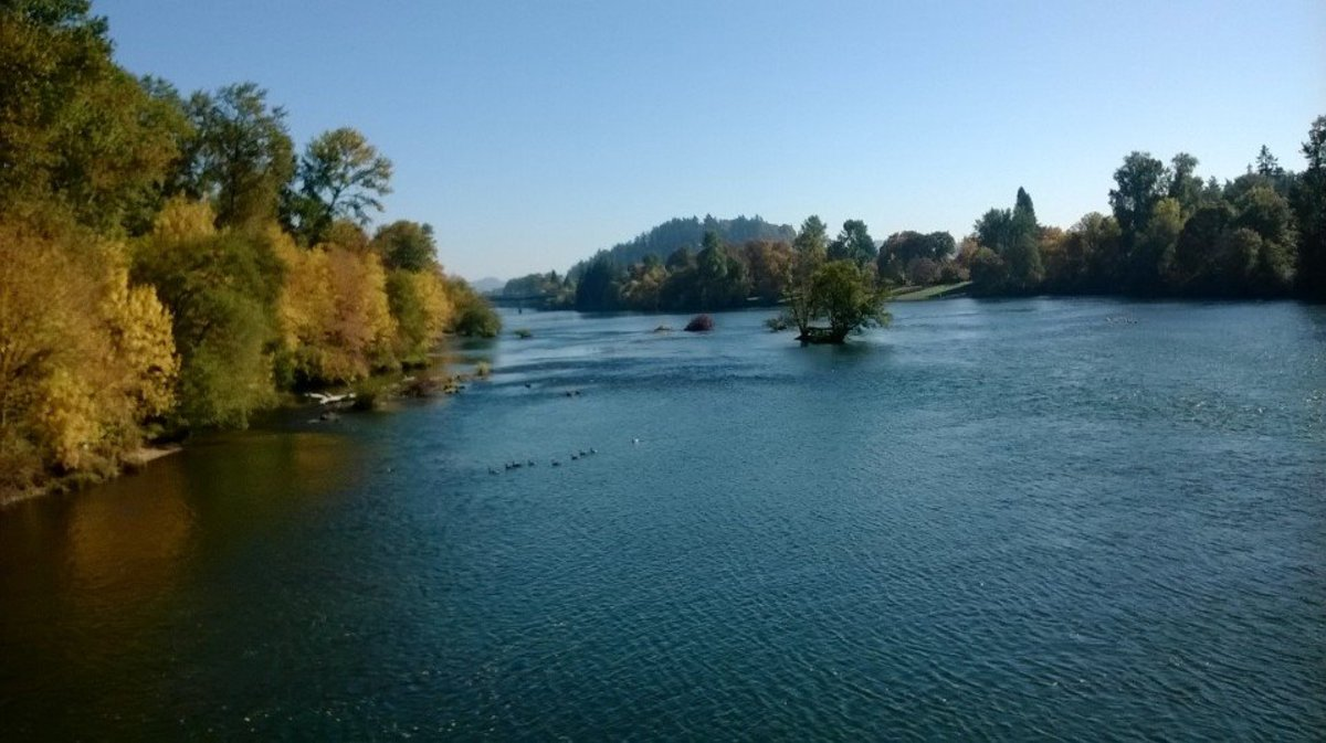 View of the Willamette River from Alton Baker Trail