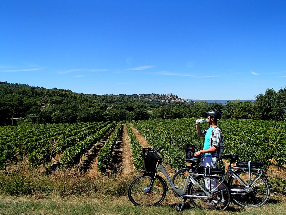 Taking a water break by the vineyard.