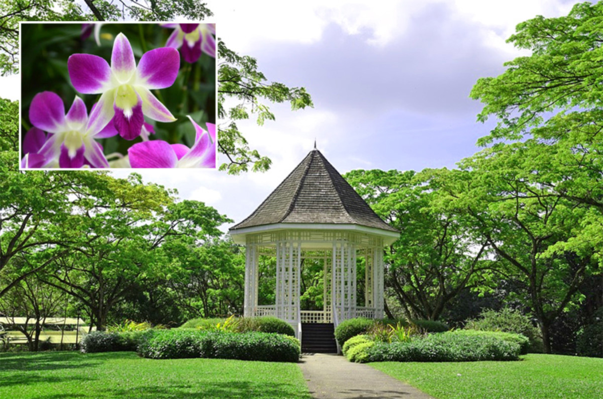 Singapore's world famous Botanical Gardens. Itself a legacy from the Straits Settlements.