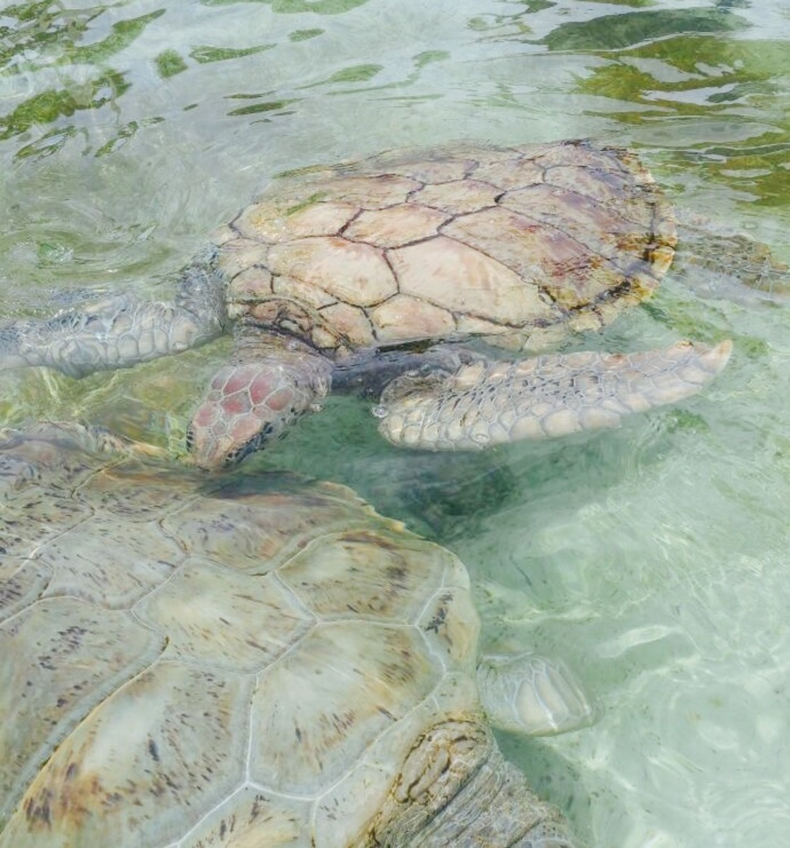 The Cayman Turtle Center is one of the best family activities in Grand Cayman