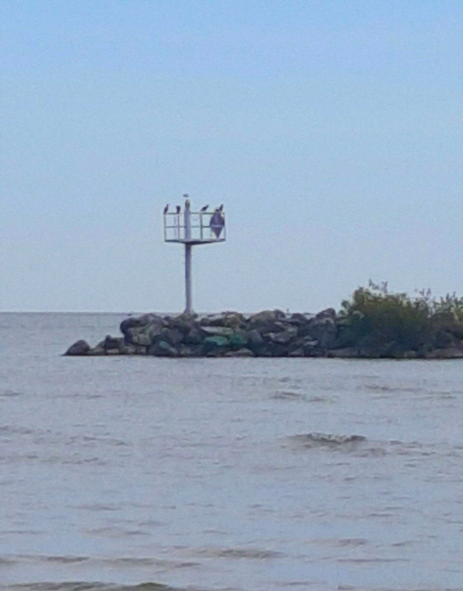 A Heron and other birds resting on the Break Wall in Lake Erie.