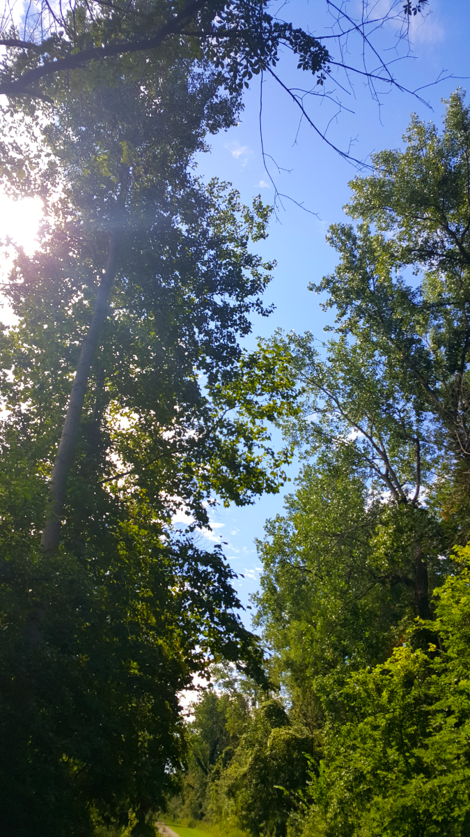 A gorgeous view of the sky, walking along a trail at East Harbor State Park.