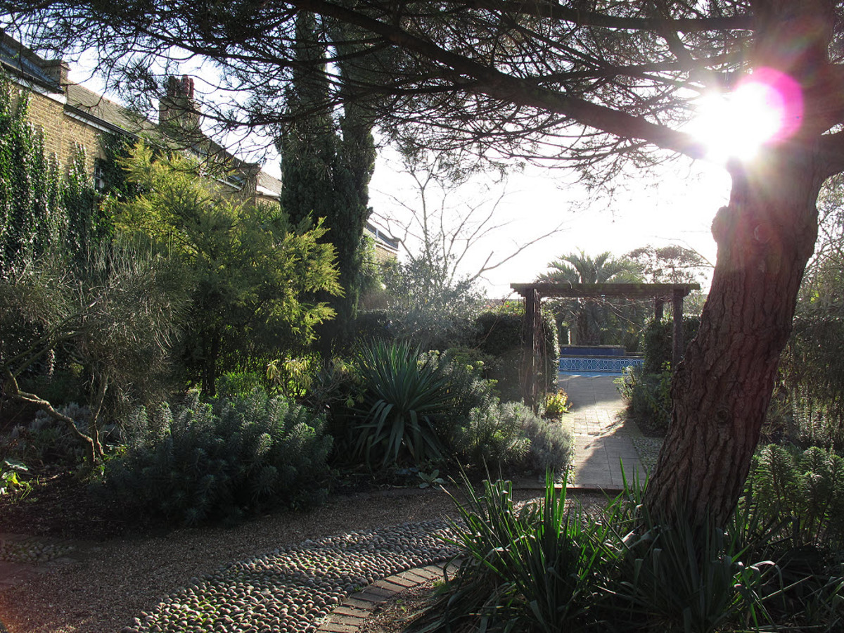 Chumleigh Gardens in the Winter Sun